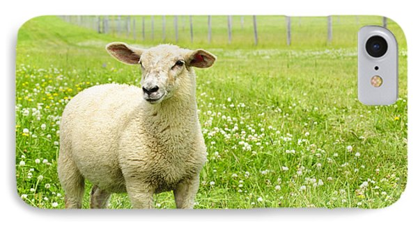 Rural Scenes iPhone 8 Case - Cute Young Sheep by Elena Elisseeva