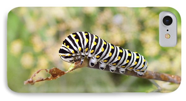 Eastern Black Swallowtail Caterpillar  IPhone Case