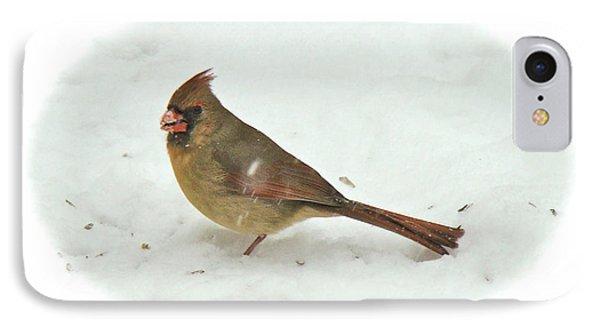 iPhone 8 Case - Eastern Cardinal - Cardinalis Cardinalis by Mother Nature