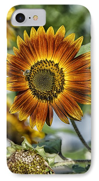 End Of Sunflower Season IPhone Case