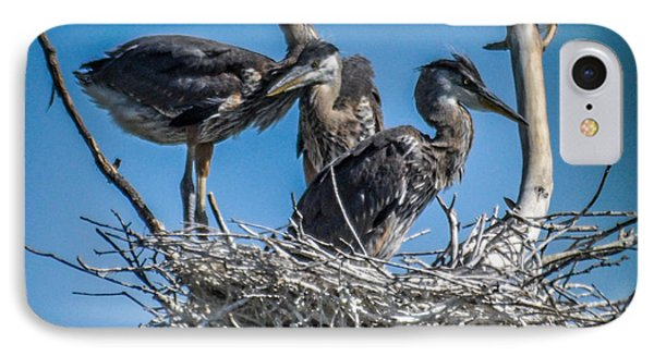Great Blue Heron On Nest IPhone Case