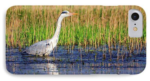 Grey Heron, Ardea Cinerea, In A Pond IPhone Case