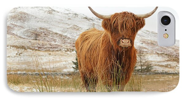 Cow iPhone 8 Case - Highland Cow by Grant Glendinning