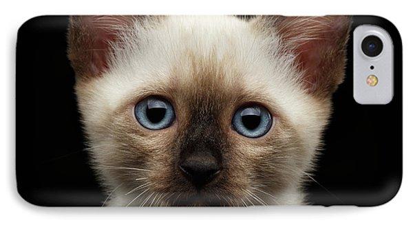 Mekong Bobtail Kitty With Blue Eyes On Isolated Black Background IPhone Case