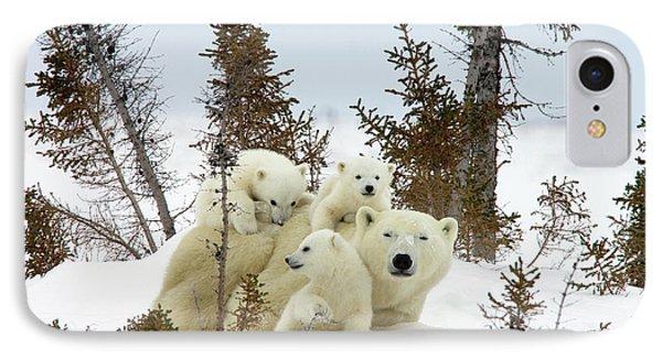 Polar Bear Ursus Maritimus Trio IPhone Case