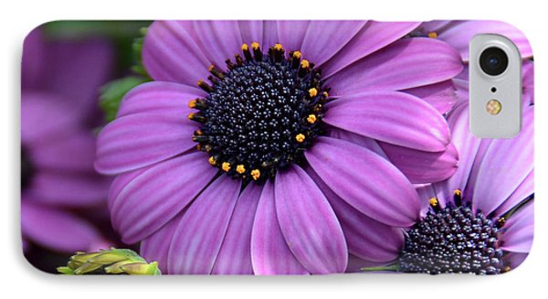 African Daisy IPhone Case