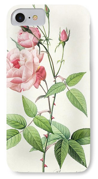 Rosa Indica Vulgaris IPhone Case