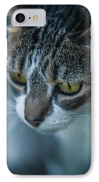 Stray Cat IPhone Case