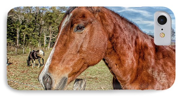 Wild Horse In Smoky Mountain National Park IPhone Case