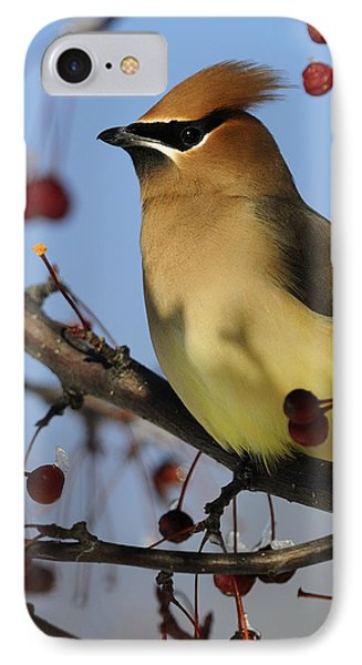 Cedar Waxwing... IPhone Case