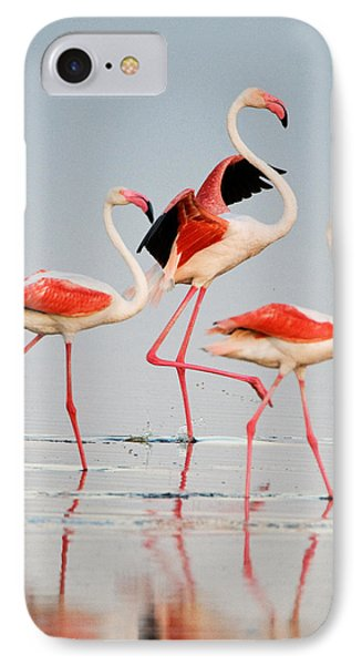 Greater Flamingos Phoenicopterus Roseus IPhone Case