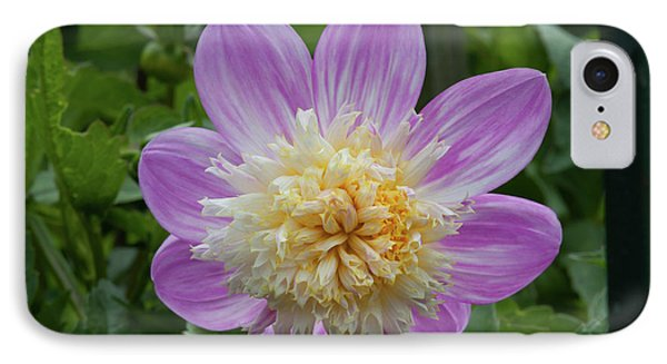 Golden Gate Park Dahlia IPhone Case