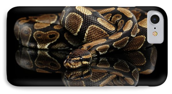 Ball Or Royal Python Snake On Isolated Black Background IPhone Case