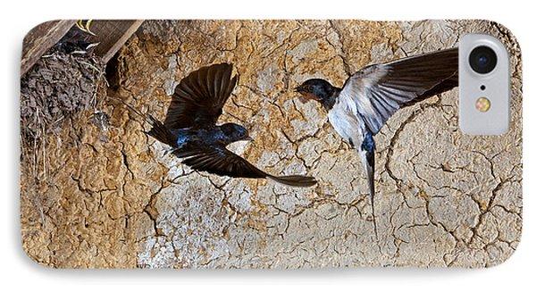Barn Swallow Hirundo Rustica IPhone Case