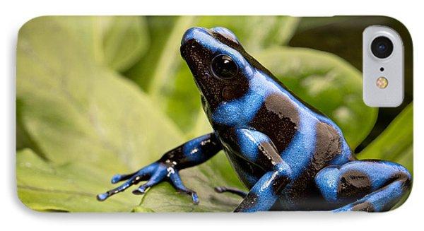 Blue Poison Dart Frog IPhone Case