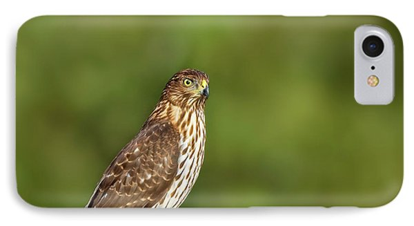 IPhone Case featuring the photograph Red-tailed Hawk by Peter Lakomy