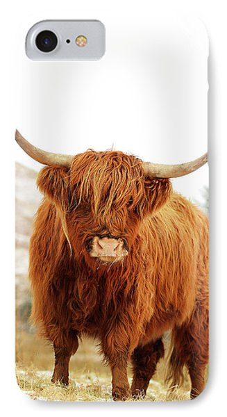 Highland Cow IPhone Case
