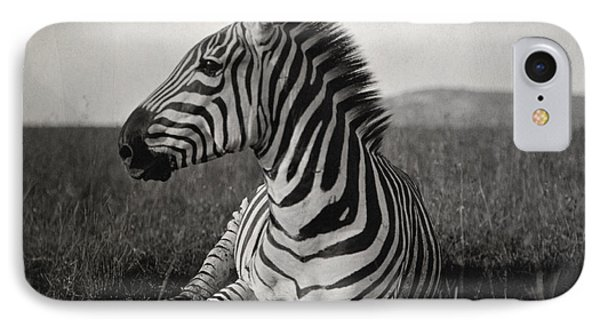 A Burchells Zebra At Rest IPhone Case