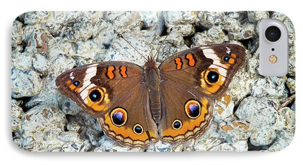 A Common Buckeye IPhone Case