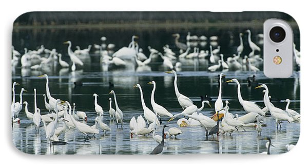 A Group Of Egrets, Herons,  Ibises IPhone Case