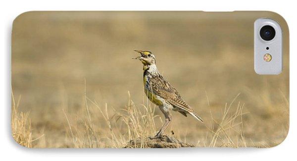 A Juvenile Western Meadowlark IPhone Case