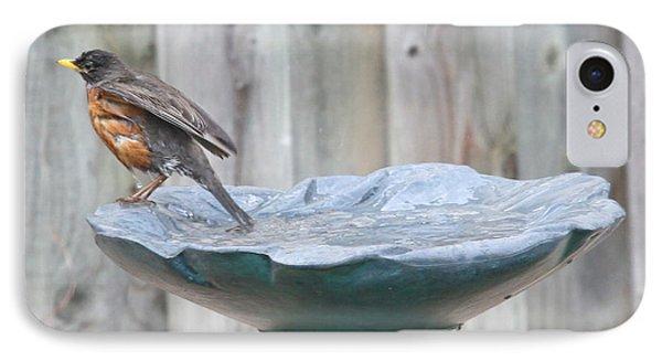 A Robin Relaxes After A Vigourous Bath IPhone Case