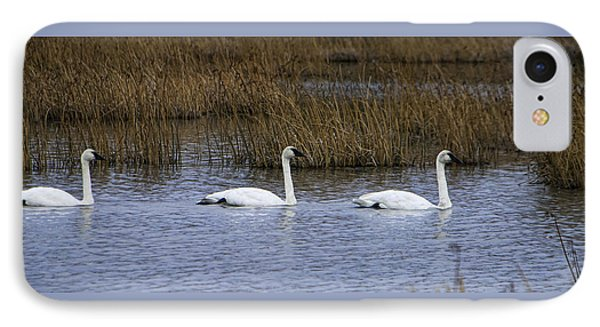 A Trio Of Swans IPhone Case