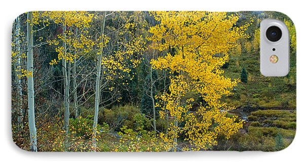 A Walk In The Aspen Forest IPhone Case