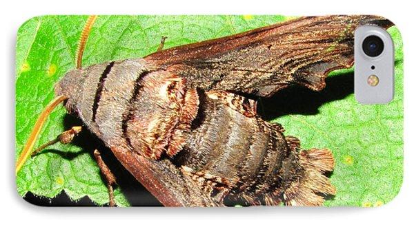 Abbotts Sphinx Moth IPhone Case