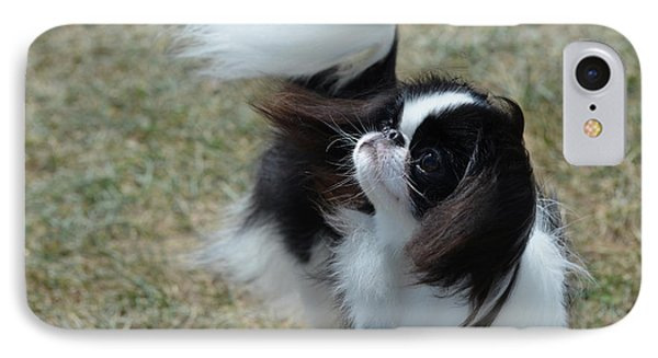 Adorable Black And White Japanese Chin Dog IPhone Case