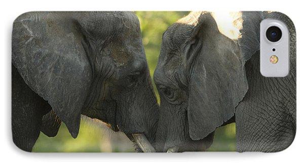 African Elephants Loxodonta Africana IPhone Case