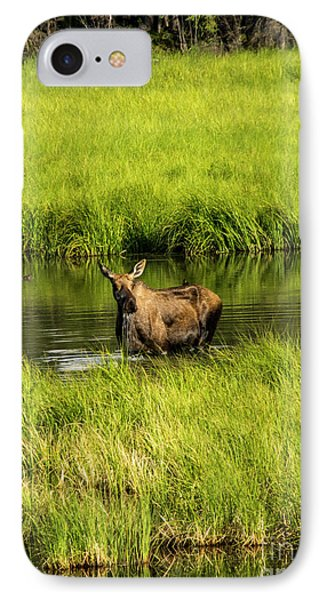 Alaskan Moose IPhone Case