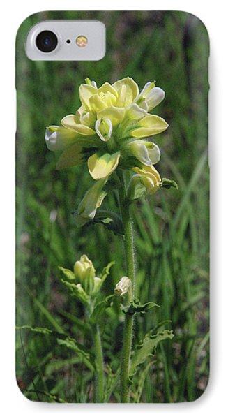 Albino Texas Paintbrush IPhone Case