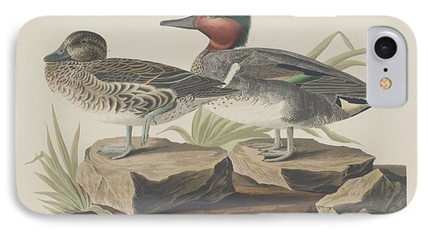 American Green-winged Teal IPhone Case