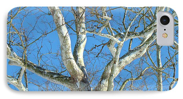 iPhone 8 Case - American Sycamore - Platanus Occidentalis by Mother Nature