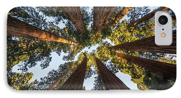 Amongst The Giant Sequoias IPhone Case