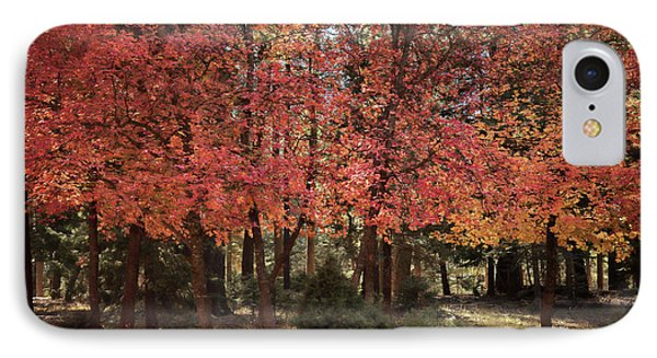 IPhone Case featuring the photograph An Autumn Walk In The Woods  by Saija Lehtonen
