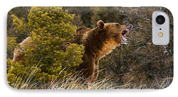 Angry Grizzly Behind Tree IPhone Case
