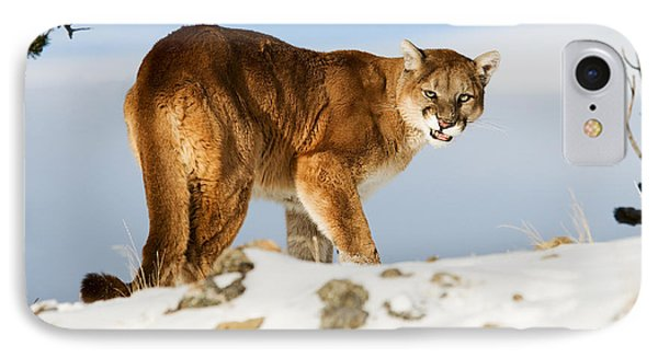 Angry Mountain Lion IPhone Case