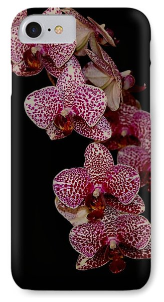 Anniversary Orchid Plant On Black IPhone Case