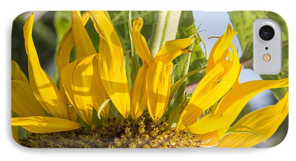 Ants On A Sunflower IPhone Case