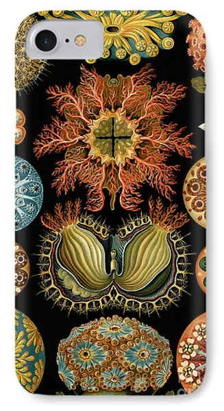 Beauty In Nature iPhone 8 Case - Ascidiae by Ernst Haeckel