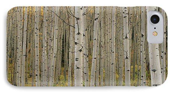 Aspen Grove In Fall, Kebler Pass IPhone Case