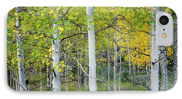 Aspens In Autumn 6 - Santa Fe National Forest New Mexico IPhone Case