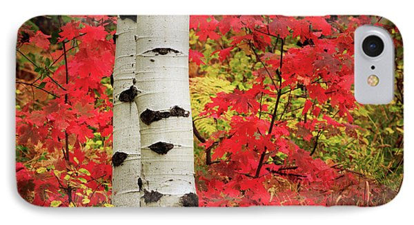 Aspens With Red Maple IPhone Case