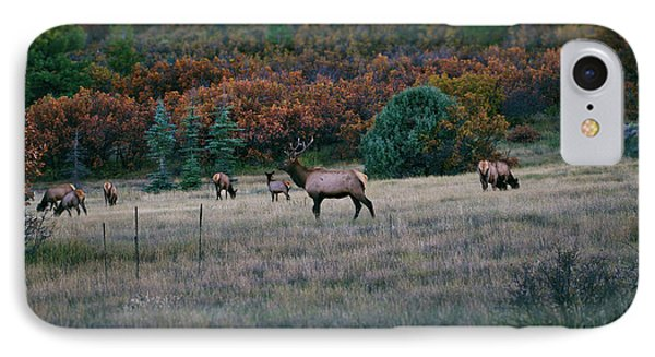 Autumn Bull Elk IPhone Case