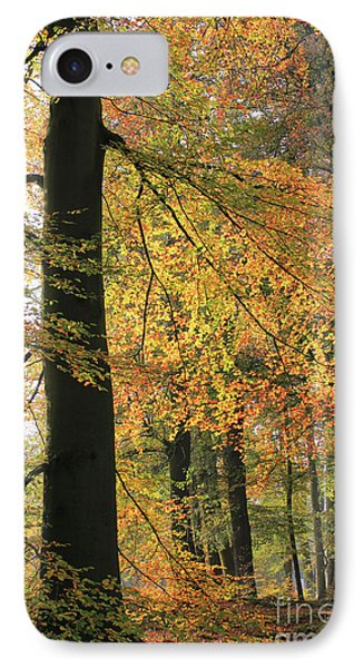 Autumn Colored Trees In Forest IPhone Case