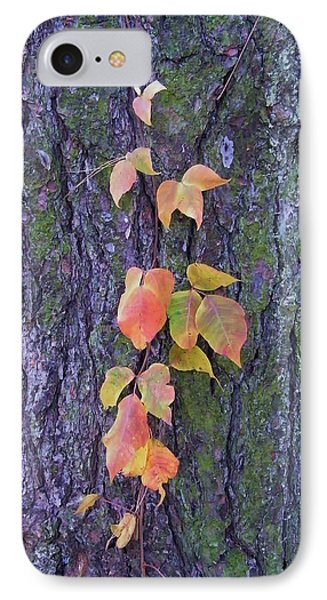 Autumn Vine Leaves On Tree Trunk    Indiana IPhone Case