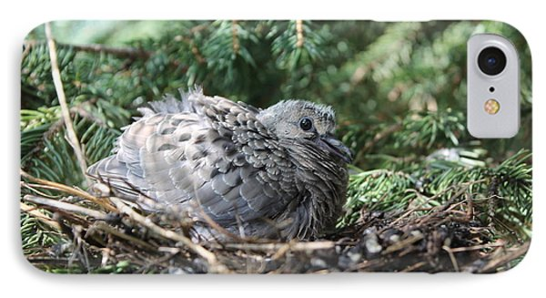 Baby Morning Dove IPhone Case