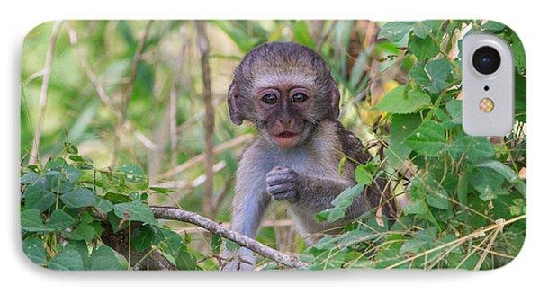 Baby Vervet Monkey IPhone Case